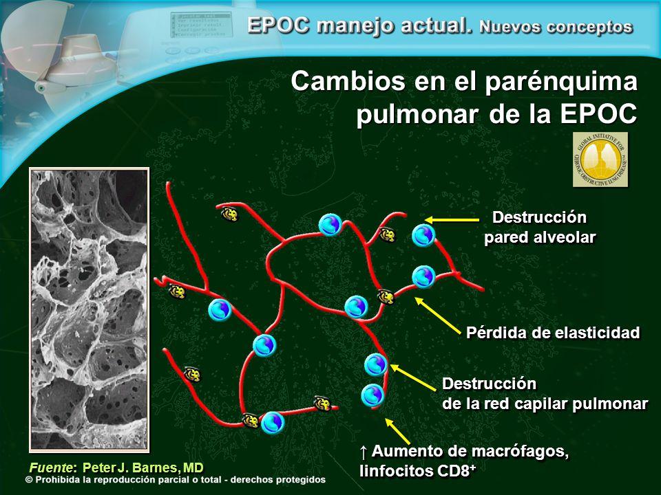 Cambios en el parénquima pulmonar de la EPOC