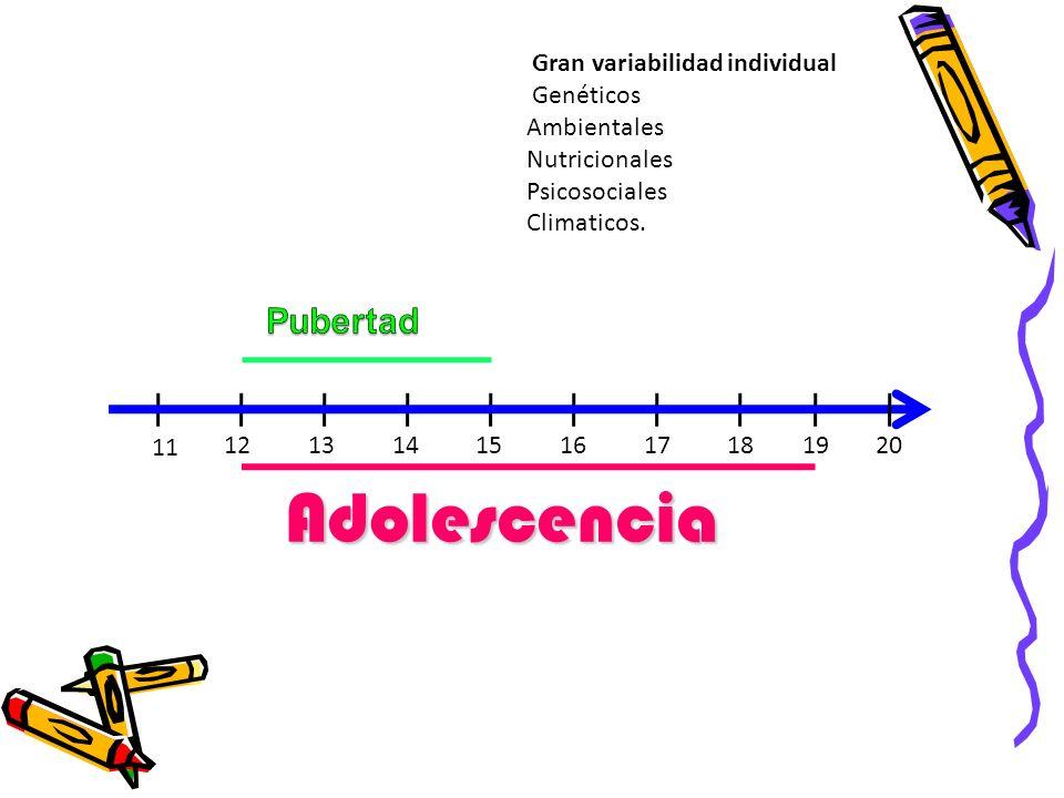 Adolescencia Pubertad Gran variabilidad individual Genéticos