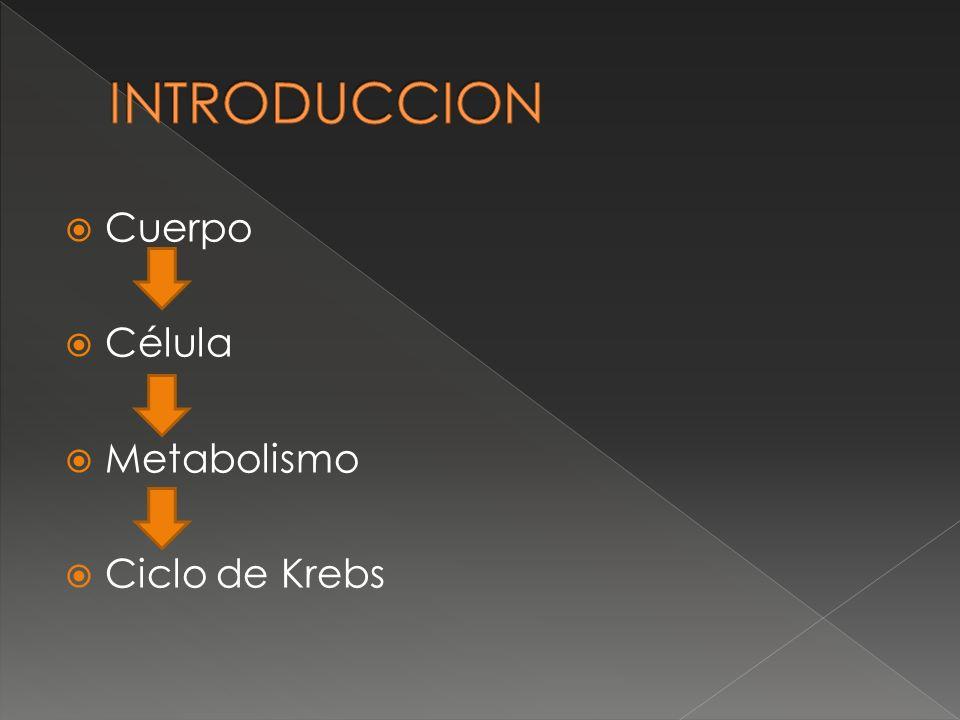 INTRODUCCION Cuerpo Célula Metabolismo Ciclo de Krebs
