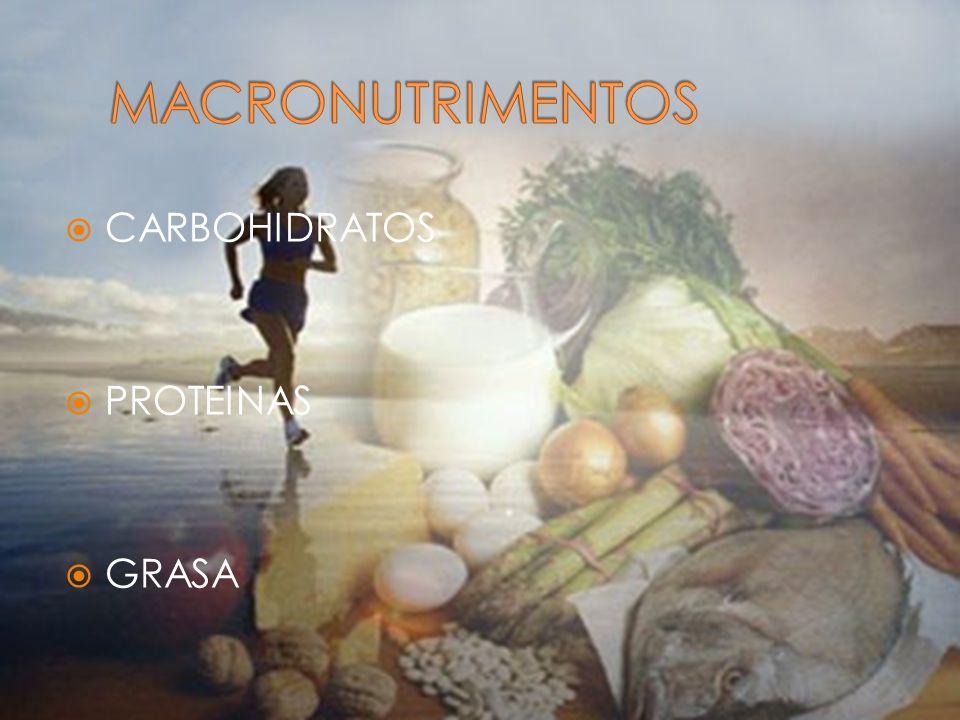 MACRONUTRIMENTOS CARBOHIDRATOS PROTEINAS GRASA