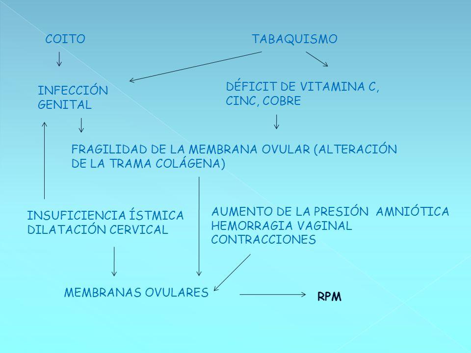 COITO TABAQUISMO. DÉFICIT DE VITAMINA C, CINC, COBRE. INFECCIÓN GENITAL. FRAGILIDAD DE LA MEMBRANA OVULAR (ALTERACIÓN DE LA TRAMA COLÁGENA)