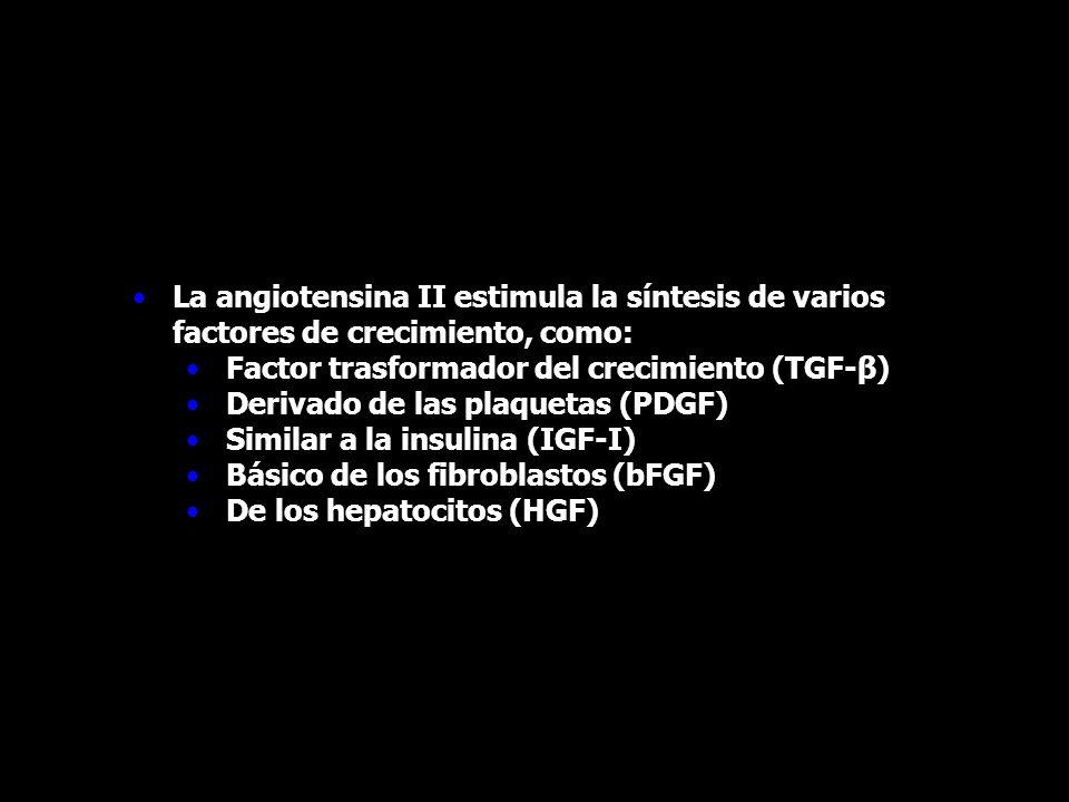 La angiotensina II estimula la síntesis de varios factores de crecimiento, como: