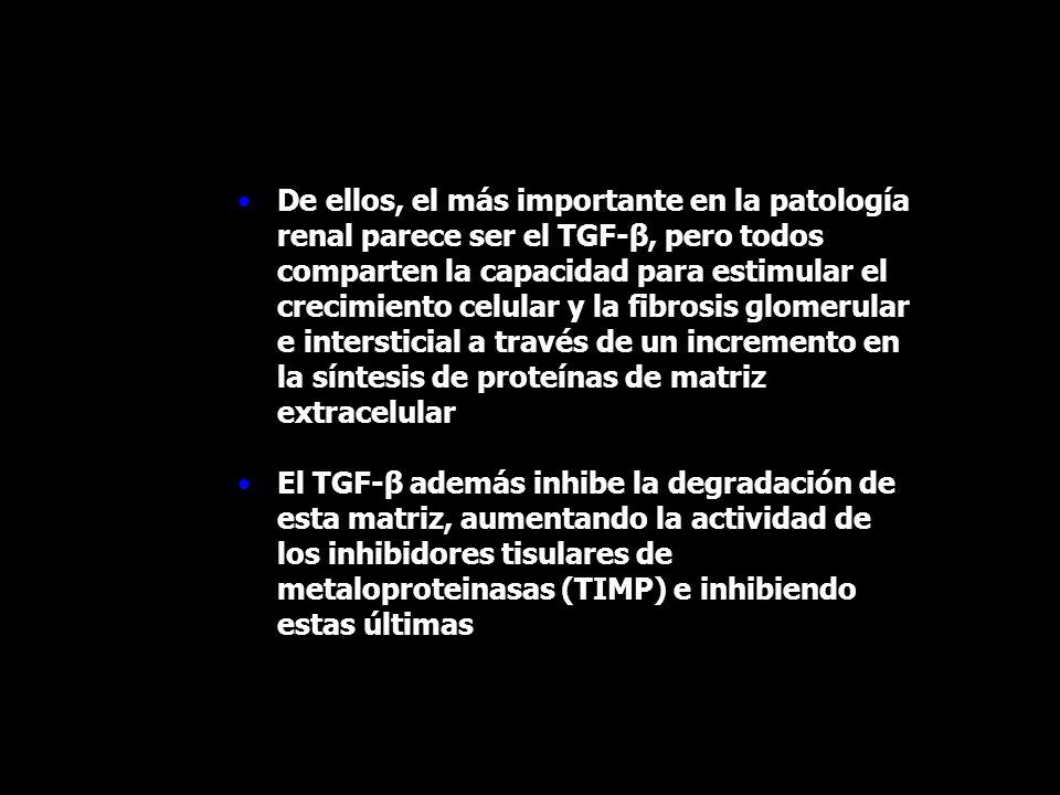 De ellos, el más importante en la patología renal parece ser el TGF-β, pero todos comparten la capacidad para estimular el crecimiento celular y la fibrosis glomerular e intersticial a través de un incremento en la síntesis de proteínas de matriz extracelular