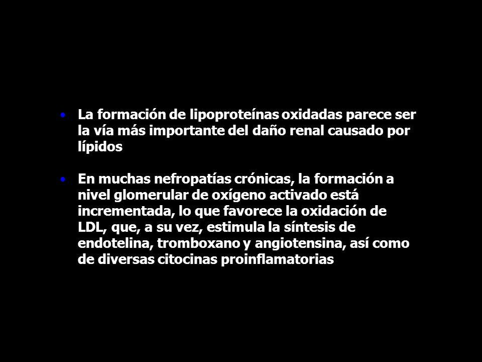 La formación de lipoproteínas oxidadas parece ser la vía más importante del daño renal causado por lípidos