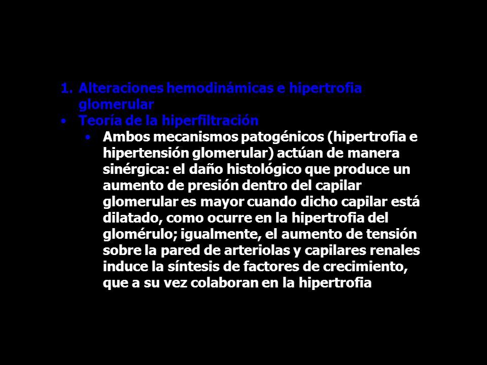 Alteraciones hemodinámicas e hipertrofia glomerular