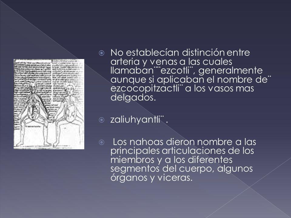 No establecían distinción entre arteria y venas a las cuales llamaban¨¨ezcotli¨, generalmente aunque si aplicaban el nombre de¨ ezcocopitzactli¨ a los vasos mas delgados.