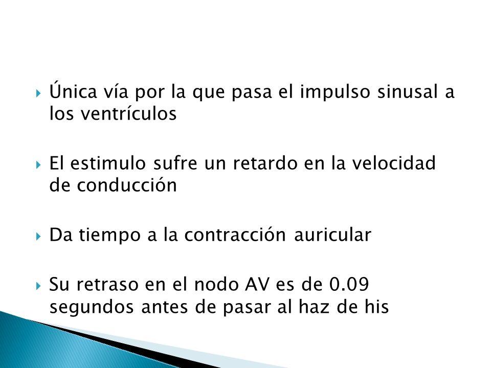 Única vía por la que pasa el impulso sinusal a los ventrículos