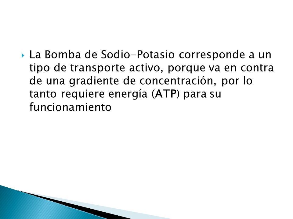 La Bomba de Sodio-Potasio corresponde a un tipo de transporte activo, porque va en contra de una gradiente de concentración, por lo tanto requiere energía (ATP) para su funcionamiento