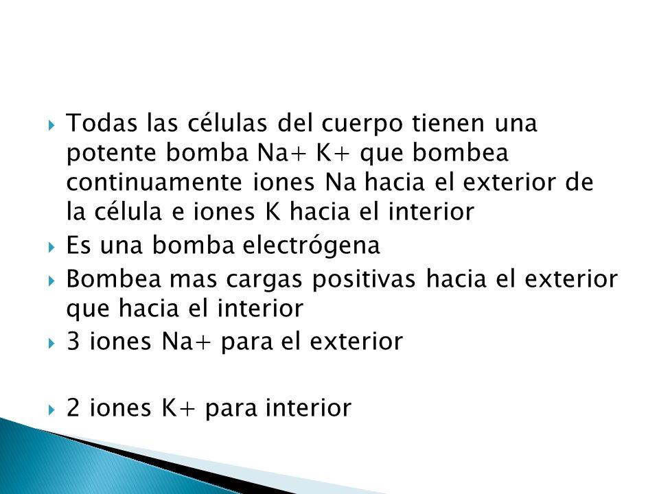 Todas las células del cuerpo tienen una potente bomba Na+ K+ que bombea continuamente iones Na hacia el exterior de la célula e iones K hacia el interior