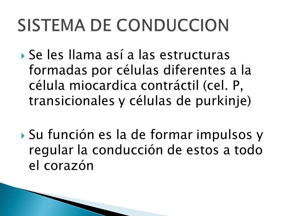 SISTEMA DE CONDUCCION
