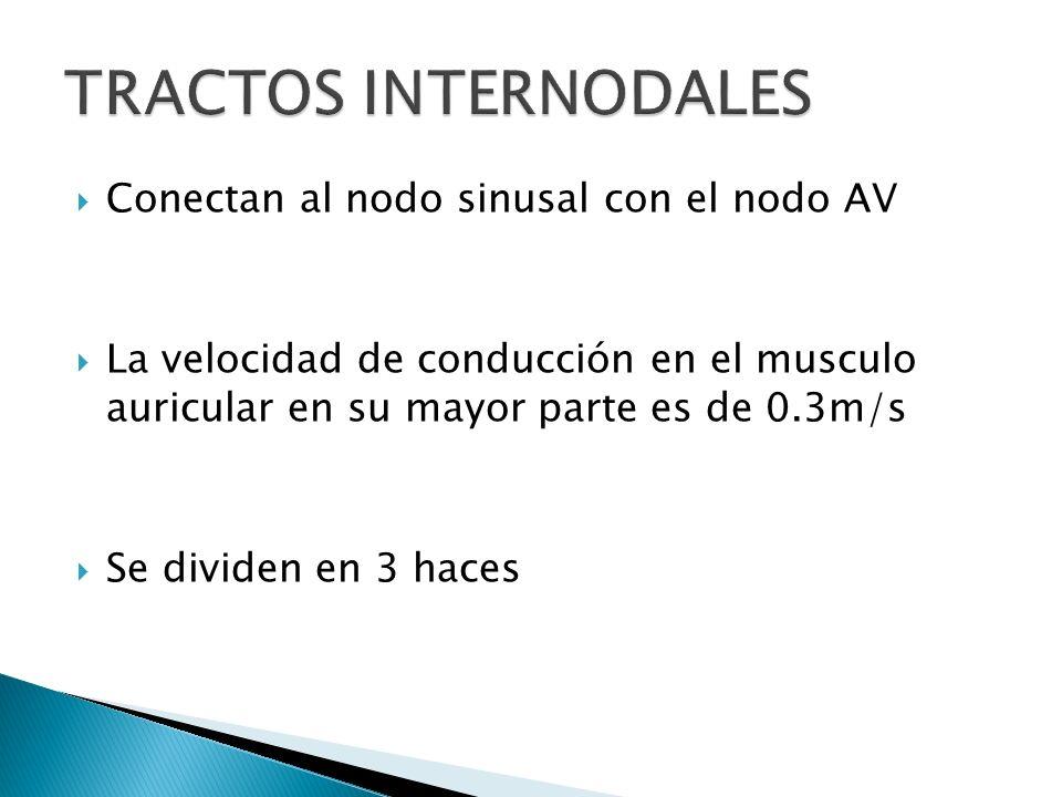 TRACTOS INTERNODALES Conectan al nodo sinusal con el nodo AV