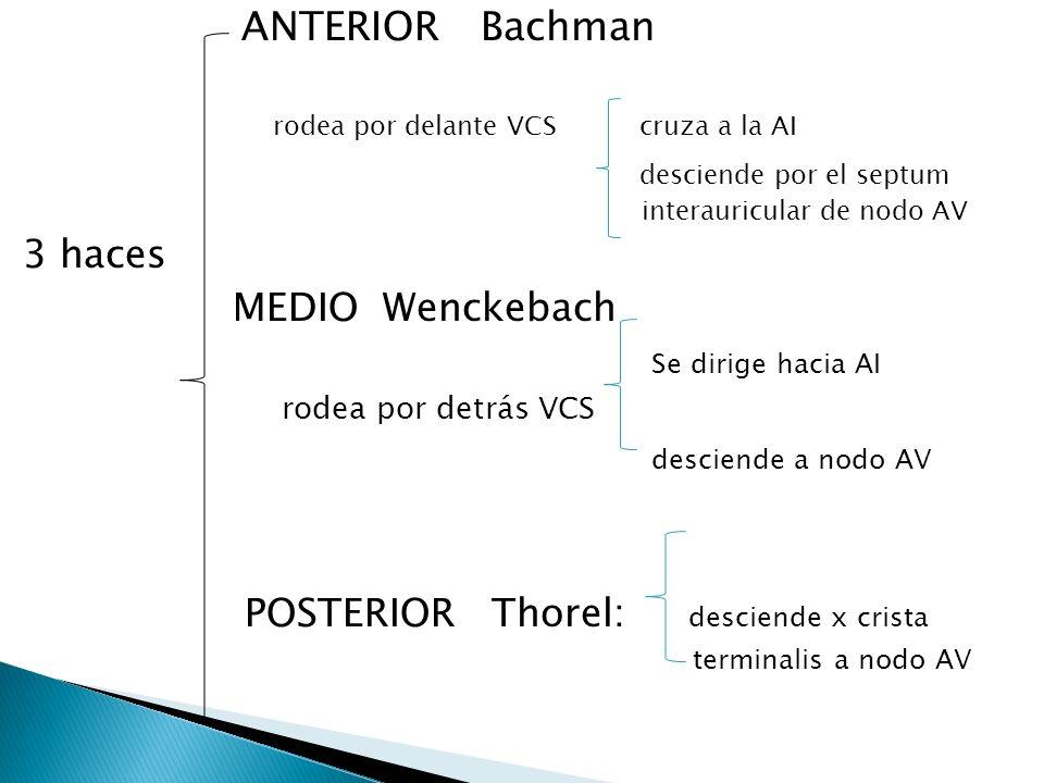 ANTERIOR Bachman desciende por el septum interauricular de nodo AV