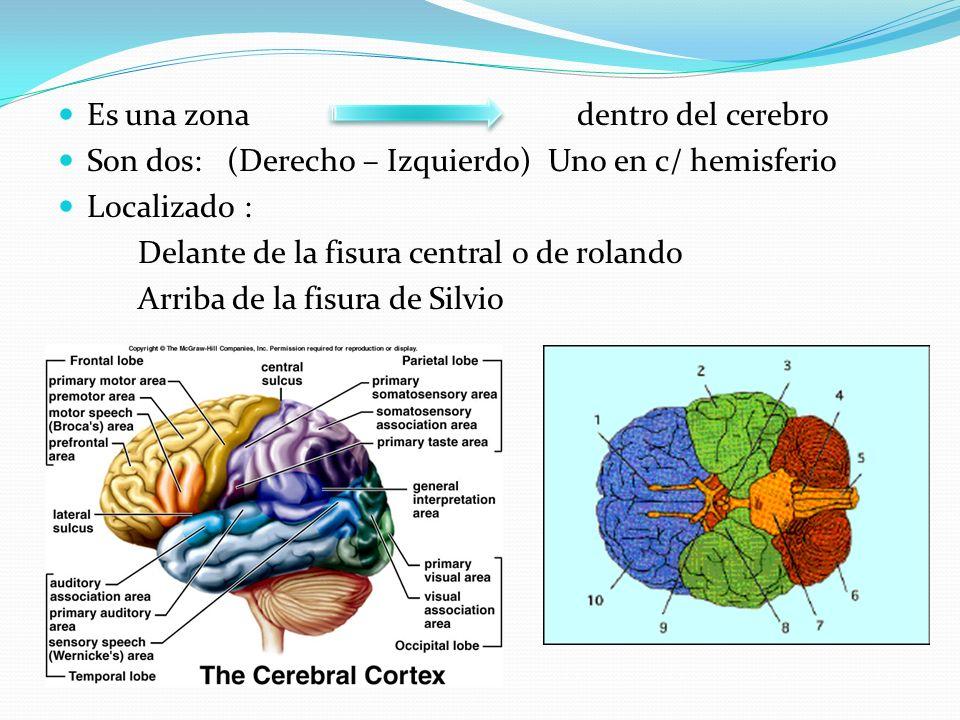 Es una zona dentro del cerebro