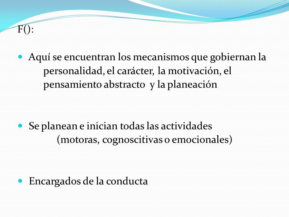F(): Aquí se encuentran los mecanismos que gobiernan la. personalidad, el carácter, la motivación, el.