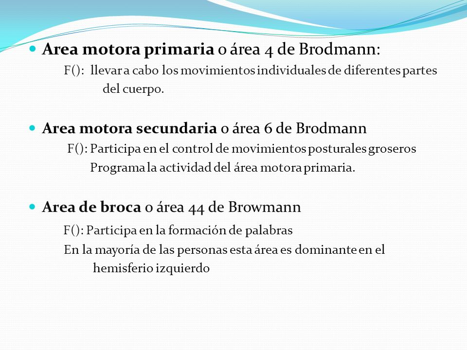 Area motora primaria o área 4 de Brodmann: