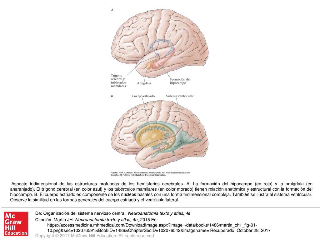 Perfecto Masterización Y Un P Anatomía Colección de Imágenes ...