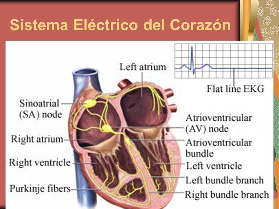 Sistema Eléctrico del Corazón
