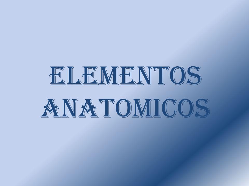 ELEMENTOS ANATOMICOS