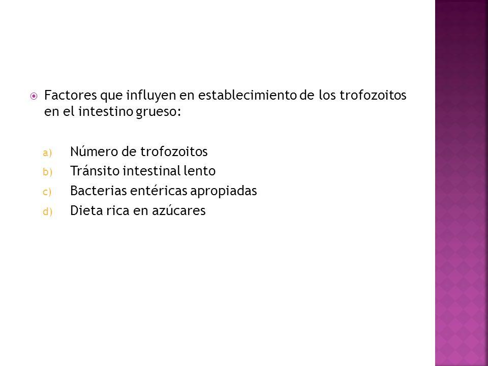 Factores que influyen en establecimiento de los trofozoitos en el intestino grueso: