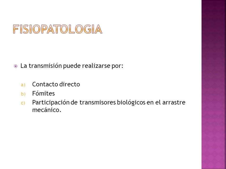 FISIOPATOLOGIA La transmisión puede realizarse por: Contacto directo