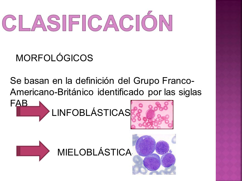 clasificación MORFOLÓGICOS