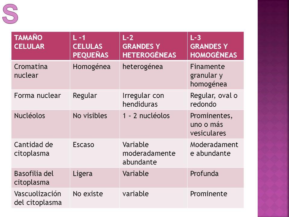 linfoblásticas TAMAÑO CELULAR L -1 CELULAS PEQUEÑAS L-2