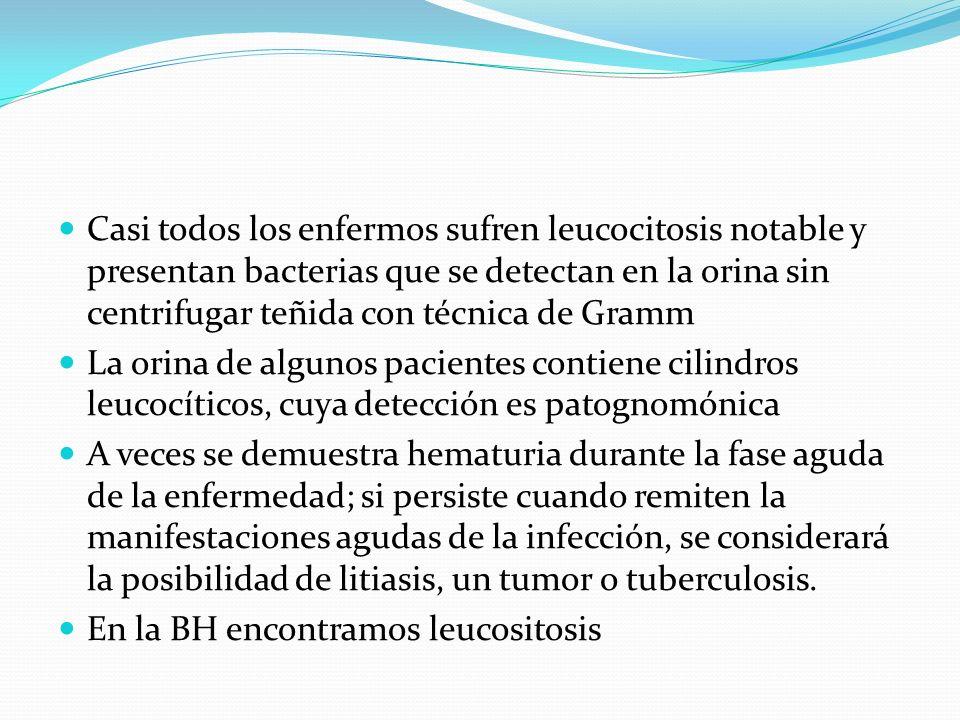 Casi todos los enfermos sufren leucocitosis notable y presentan bacterias que se detectan en la orina sin centrifugar teñida con técnica de Gramm