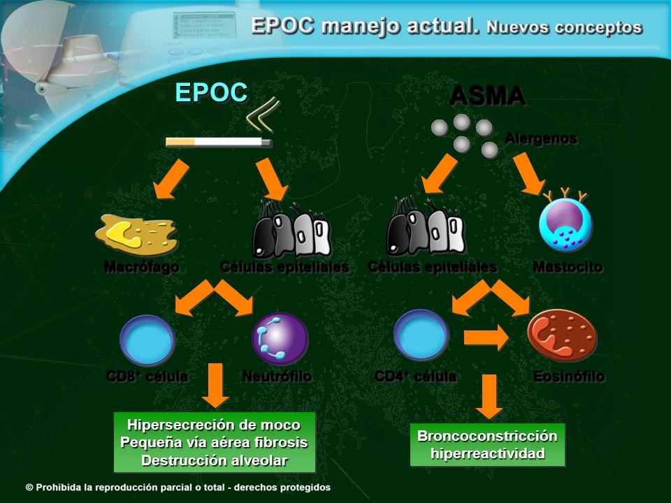 Hipersecreción de moco Pequeña vía aérea fibrosis