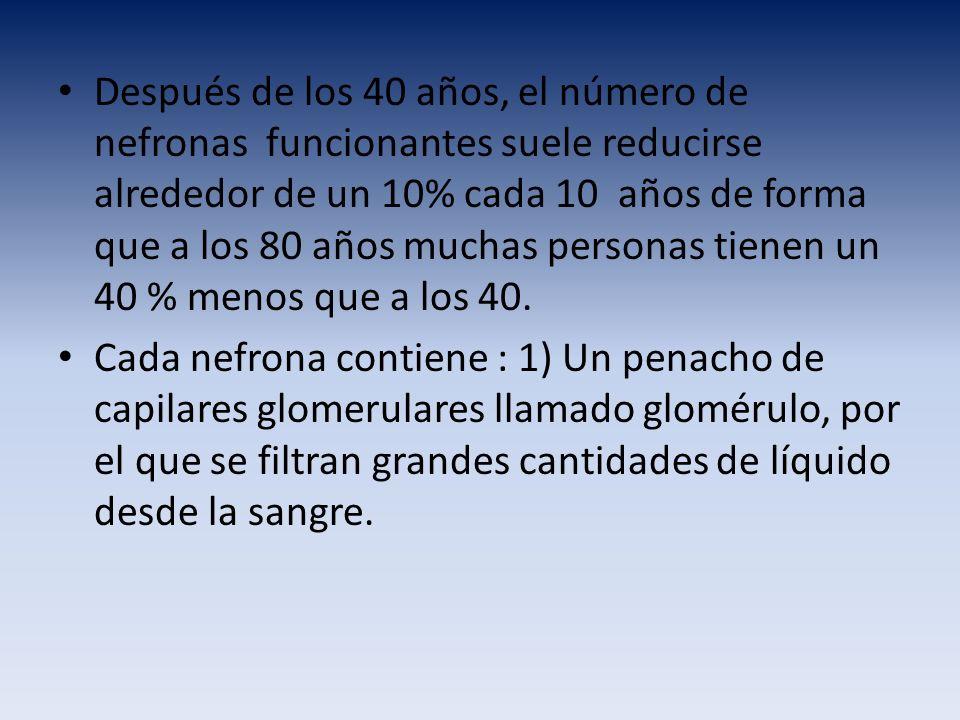 Después de los 40 años, el número de nefronas funcionantes suele reducirse alrededor de un 10% cada 10 años de forma que a los 80 años muchas personas tienen un 40 % menos que a los 40.