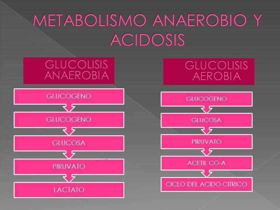 METABOLISMO ANAEROBIO Y ACIDOSIS