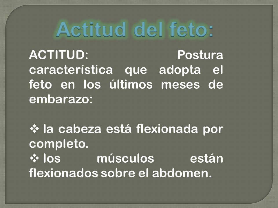 Actitud del feto: ACTITUD: Postura característica que adopta el feto en los últimos meses de embarazo: