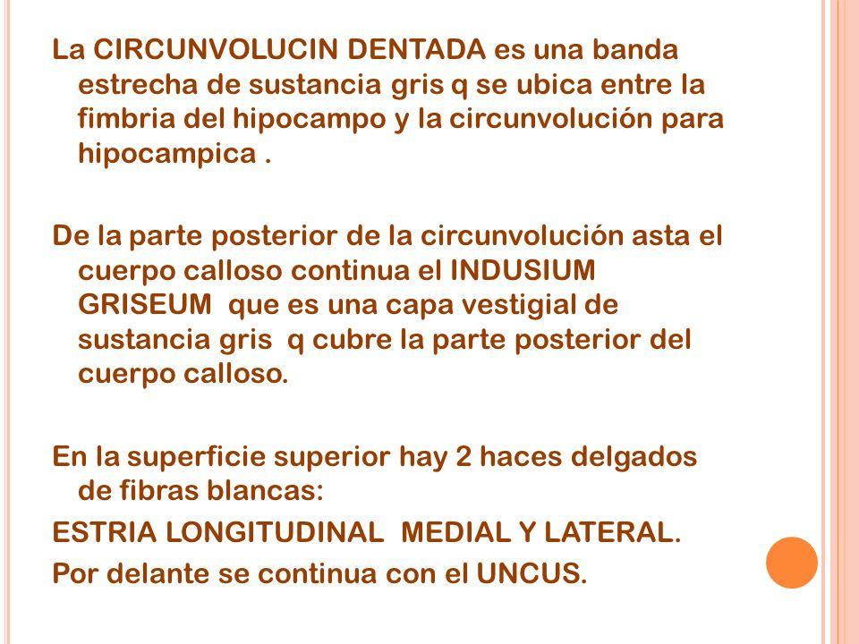 La CIRCUNVOLUCIN DENTADA es una banda estrecha de sustancia gris q se ubica entre la fimbria del hipocampo y la circunvolución para hipocampica .