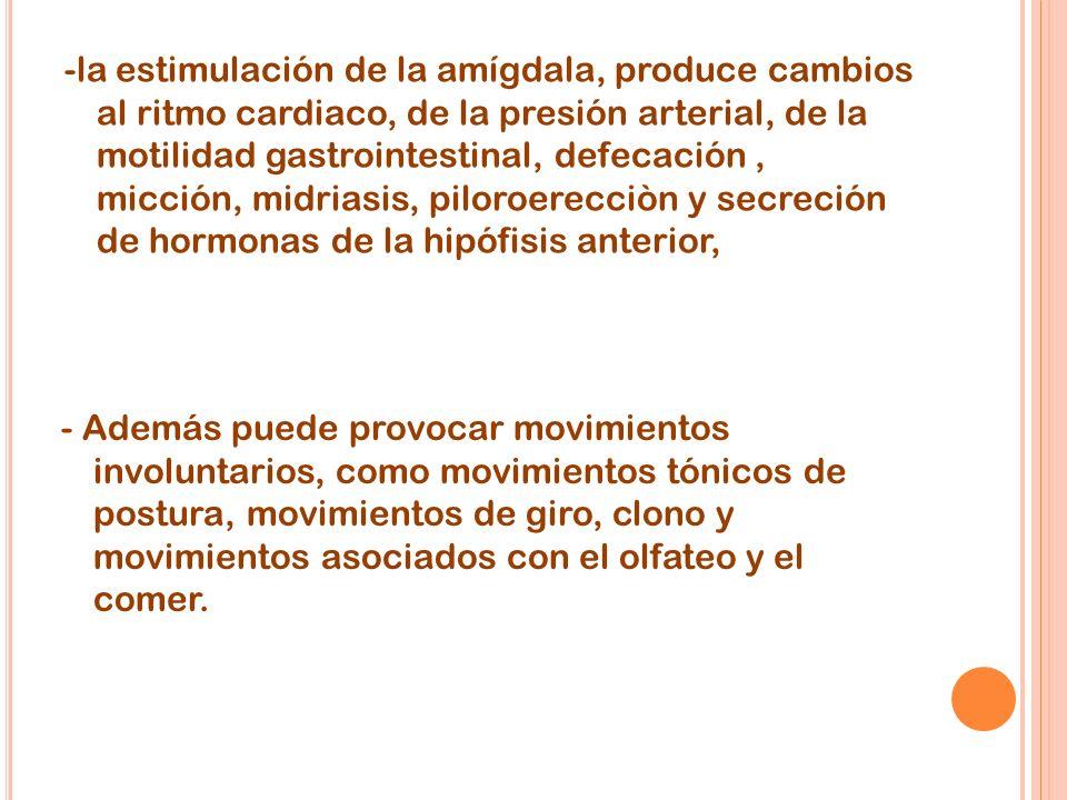-la estimulación de la amígdala, produce cambios al ritmo cardiaco, de la presión arterial, de la motilidad gastrointestinal, defecación , micción, midriasis, piloroerecciòn y secreción de hormonas de la hipófisis anterior,