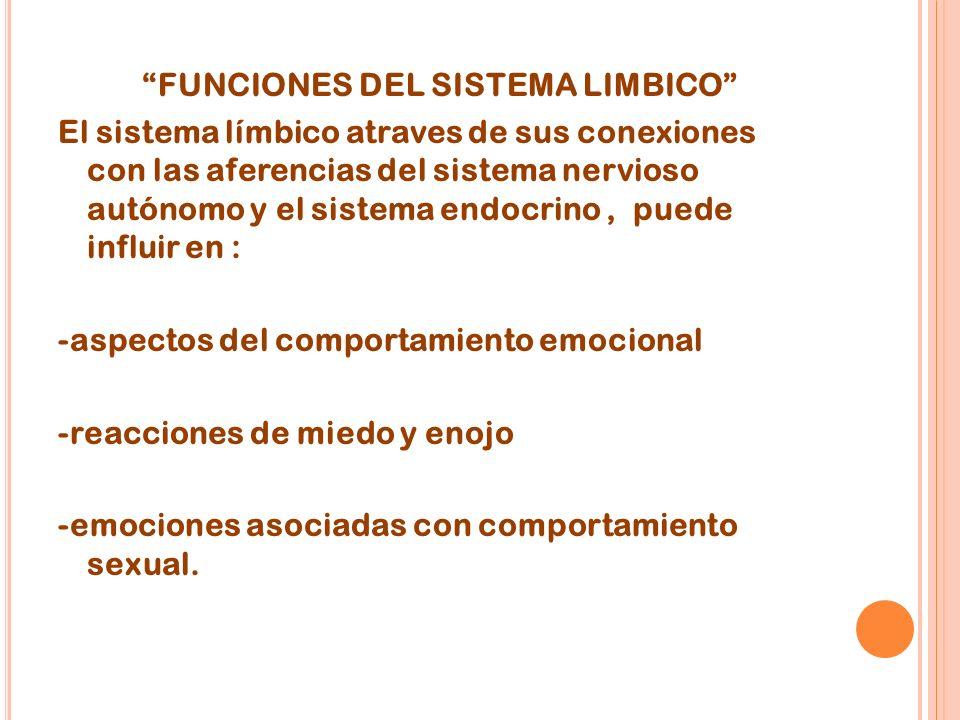 FUNCIONES DEL SISTEMA LIMBICO El sistema límbico atraves de sus conexiones con las aferencias del sistema nervioso autónomo y el sistema endocrino , puede influir en : -aspectos del comportamiento emocional -reacciones de miedo y enojo -emociones asociadas con comportamiento sexual.
