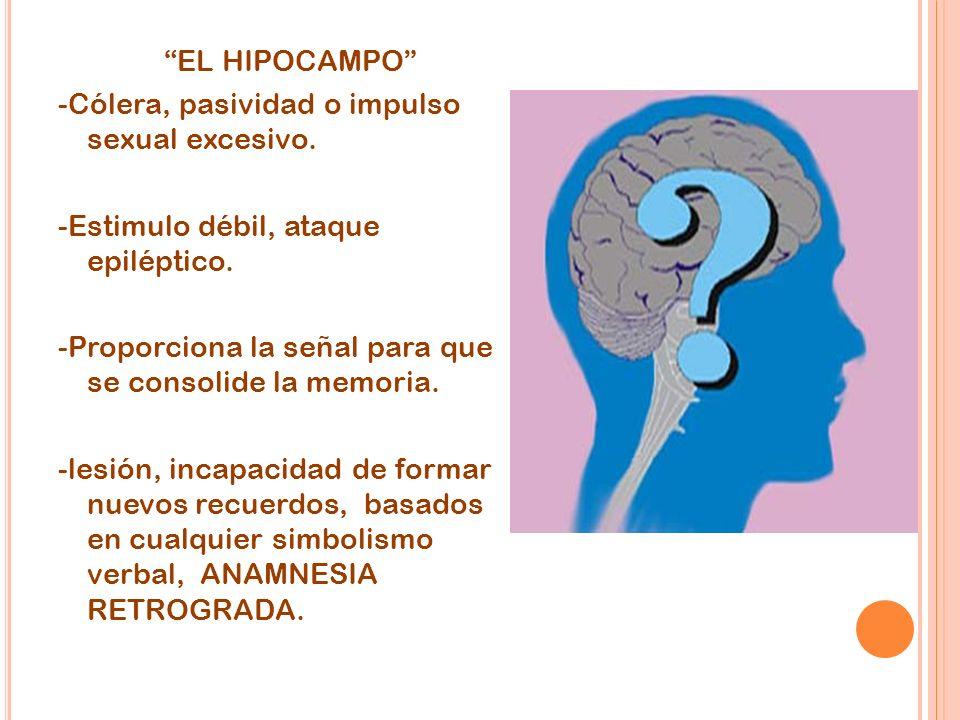 EL HIPOCAMPO -Cólera, pasividad o impulso sexual excesivo