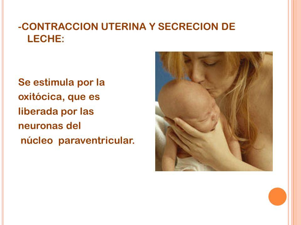 -CONTRACCION UTERINA Y SECRECION DE LECHE: Se estimula por la oxitócica, que es liberada por las neuronas del núcleo paraventricular.