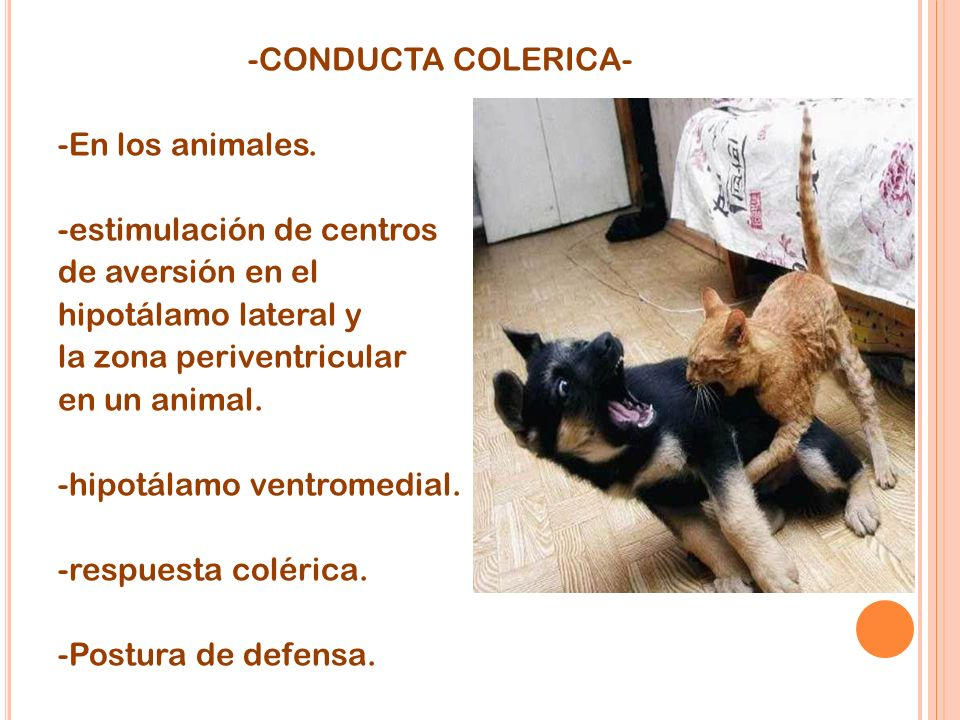 -CONDUCTA COLERICA- -En los animales