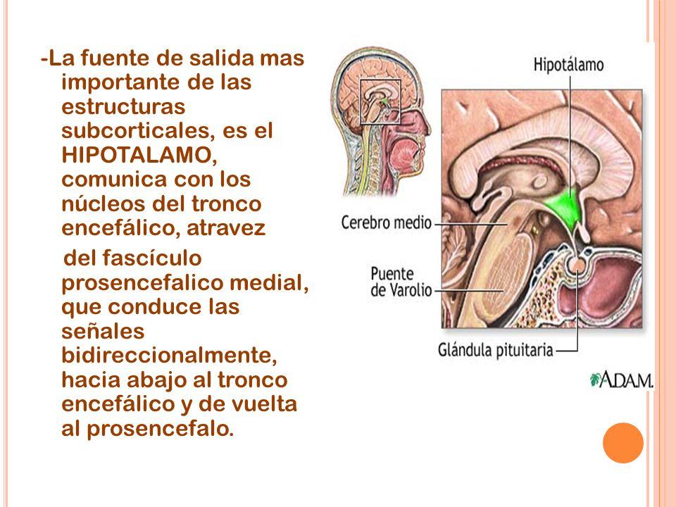 -La fuente de salida mas importante de las estructuras subcorticales, es el HIPOTALAMO, comunica con los núcleos del tronco encefálico, atravez del fascículo prosencefalico medial, que conduce las señales bidireccionalmente, hacia abajo al tronco encefálico y de vuelta al prosencefalo.