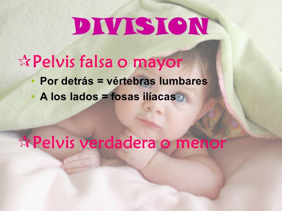 DIVISION Pelvis falsa o mayor Pelvis verdadera o menor