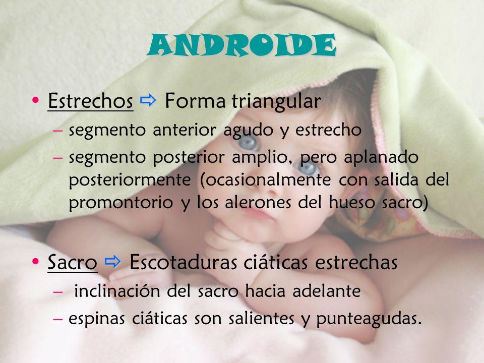 ANDROIDE Estrechos  Forma triangular
