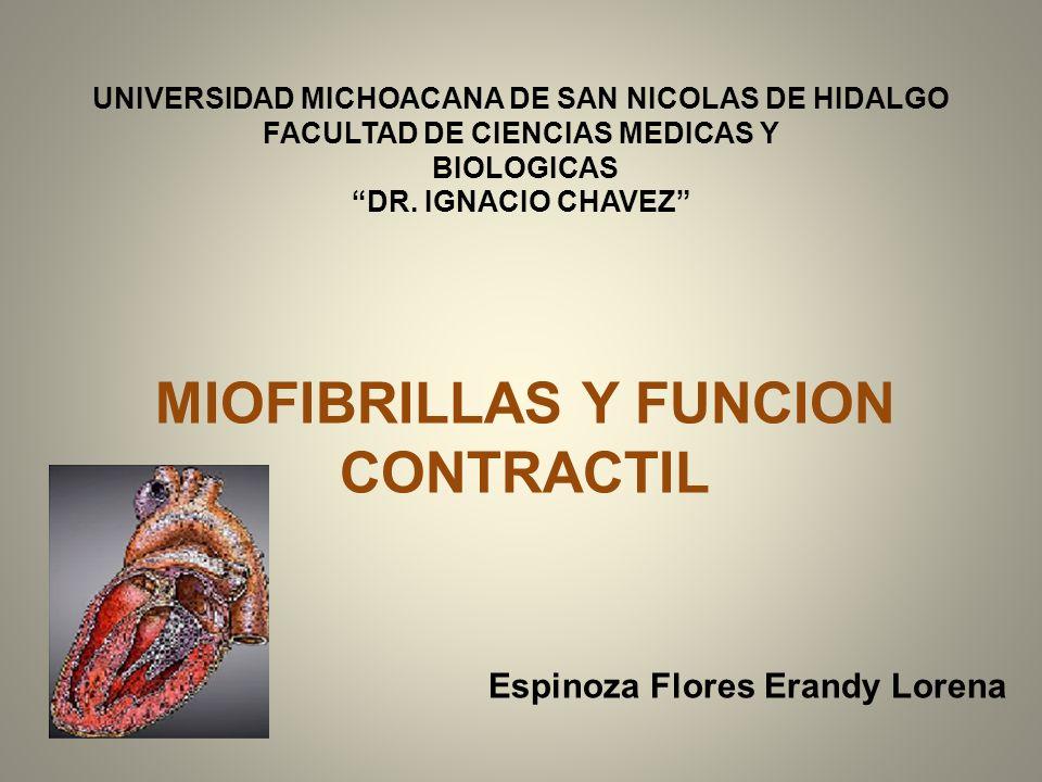 MIOFIBRILLAS Y FUNCION CONTRACTIL Espinoza Flores Erandy Lorena