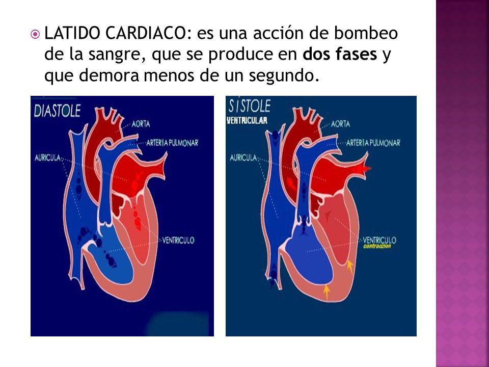 LATIDO CARDIACO: es una acción de bombeo de la sangre, que se produce en dos fases y que demora menos de un segundo.