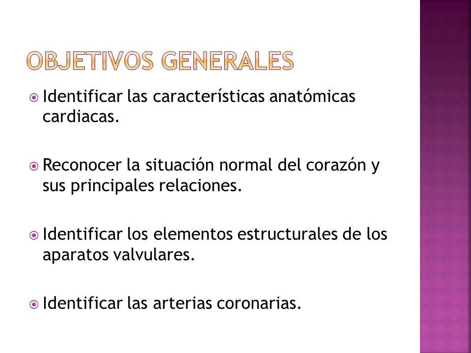 Objetivos generales Identificar las características anatómicas cardiacas. Reconocer la situación normal del corazón y sus principales relaciones.