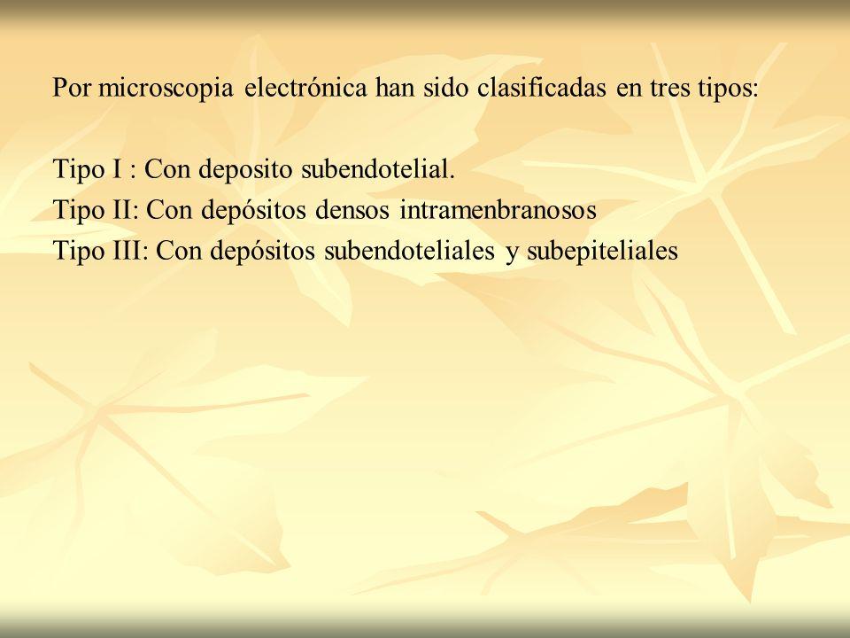 Por microscopia electrónica han sido clasificadas en tres tipos: