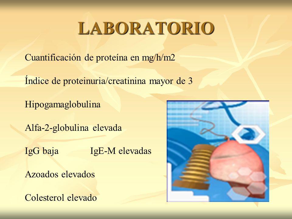 LABORATORIO Cuantificación de proteína en mg/h/m2