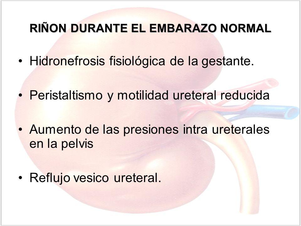 RIÑON DURANTE EL EMBARAZO NORMAL