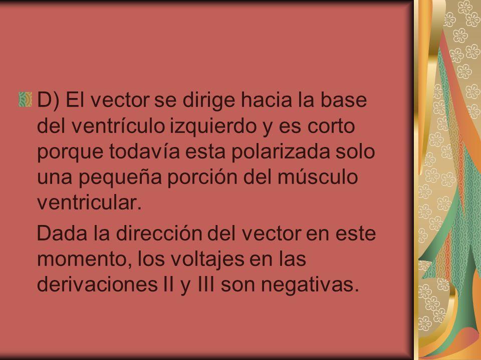 D) El vector se dirige hacia la base del ventrículo izquierdo y es corto porque todavía esta polarizada solo una pequeña porción del músculo ventricular.