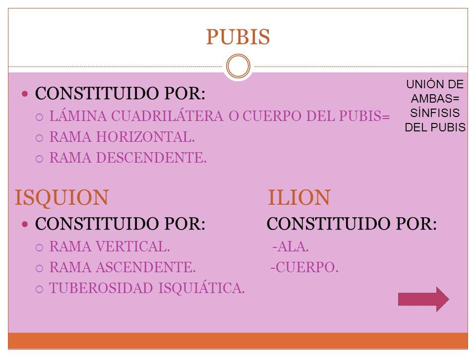 UNIÓN DE AMBAS= SÍNFISIS DEL PUBIS