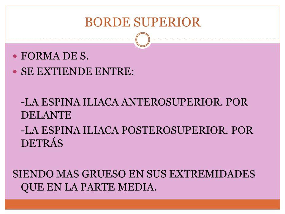 BORDE SUPERIOR FORMA DE S. SE EXTIENDE ENTRE: