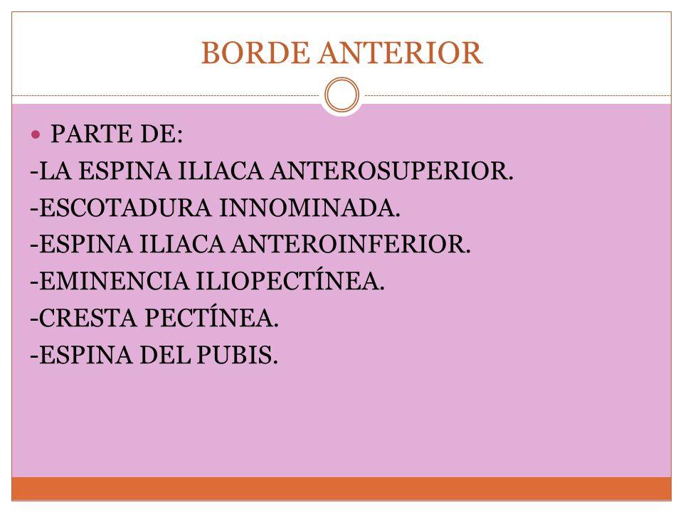 BORDE ANTERIOR PARTE DE: -LA ESPINA ILIACA ANTEROSUPERIOR.